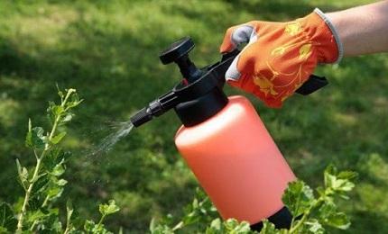 Для чего используются инсектициды и разновидности современных средств