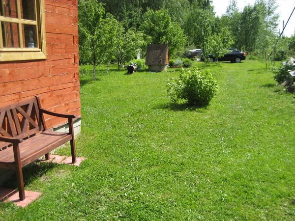 Лужайка на даче своими руками фото